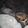 今日の猫:睡眠中
