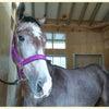 競走馬命名「オタカラハッケン」の画像