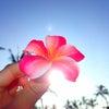 見えない龍脈に導かれていたハワイ。の画像
