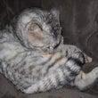 今日の猫:雨の中どこ…
