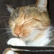 今日の猫:じゃれる猫