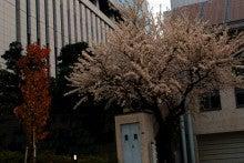 2712東京桜