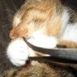 今日の猫:じゃれる猫…