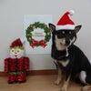 Merry Christmasの画像