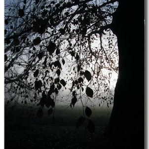 イギリスカントリーサイドの冬。プラタナス揺れる夕暮れの画像