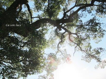 2015樹と光り