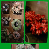 クリスマス一色☆の画像