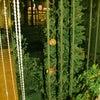 †メリークリスマス♪♪†の画像