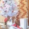 ☆マロンとクリスマスツリーの画像