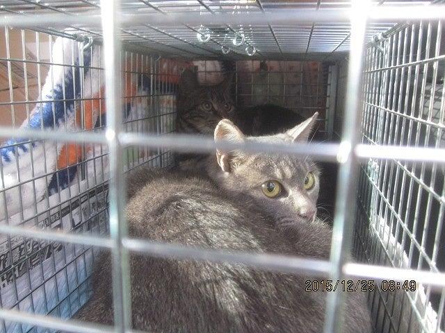 チャッピー猫2