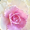 花あそび 101の画像