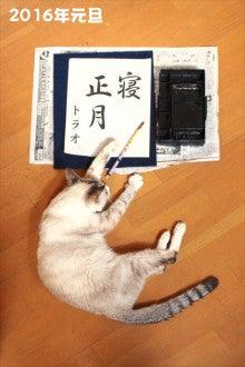 猫の寝正月