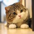 もこもこの猫