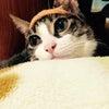 ホクちゃんの猫白血病♡近況報告の画像