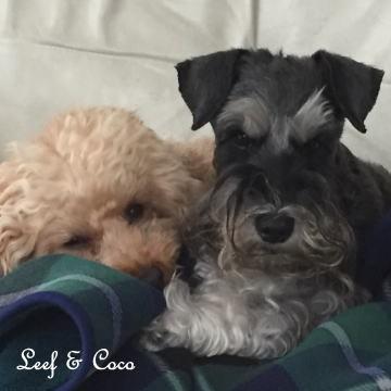 Leef&Coco1