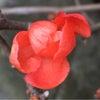 花あそび 0109の画像