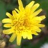 花あそび 0110の画像