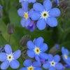 花あそび 0111の画像
