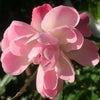 花あそび 0114の画像