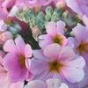 花あそび 0115の画像