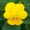 花あそび 0116の画像