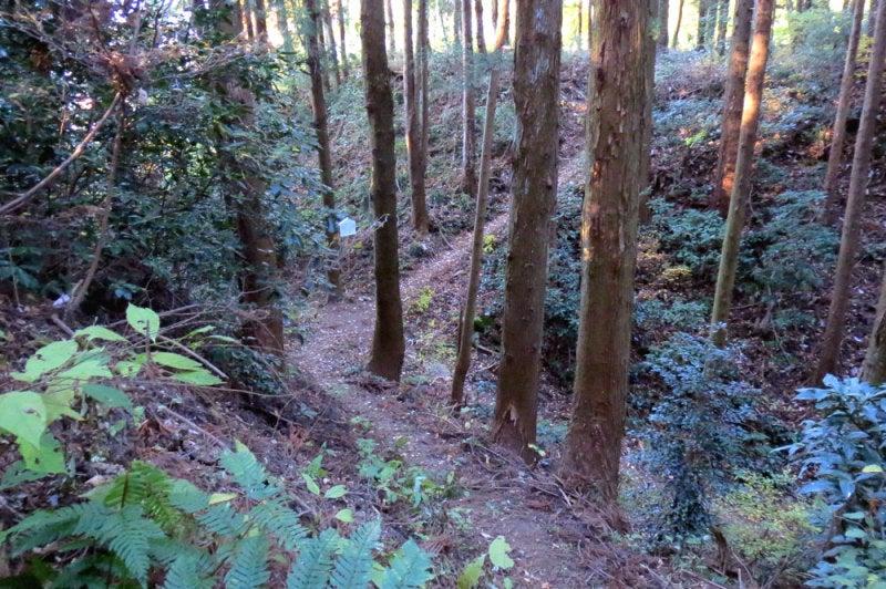 松井田城⑪上から見た堀切