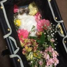 れあちゃんの葬儀に行…