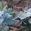 お母ちゃん、寒いよ~みちるの庭の画像