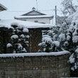雪ほんとに降った