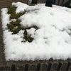 雪ダーーーー!!!の画像