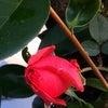花あそび 0120の画像