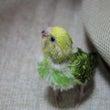 小鳥の名前