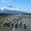 【2/2東京開催】ニュージーランド投資セミナー開催のお知らせの画像