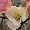 花あそび 0121の画像