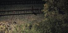 線路のところに!