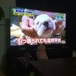 テレビっ子?U^ェ^…