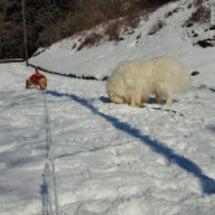 雪遊びってこんなんじ…