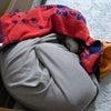 寒がりの犬の画像