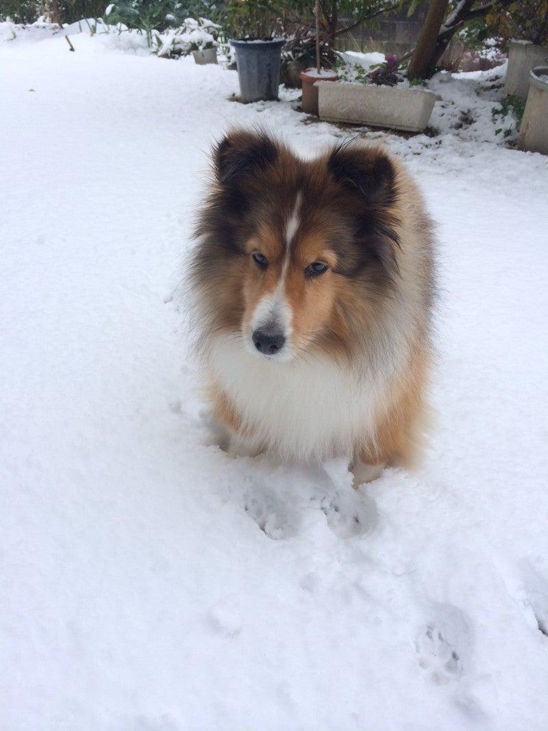 雪とパティ
