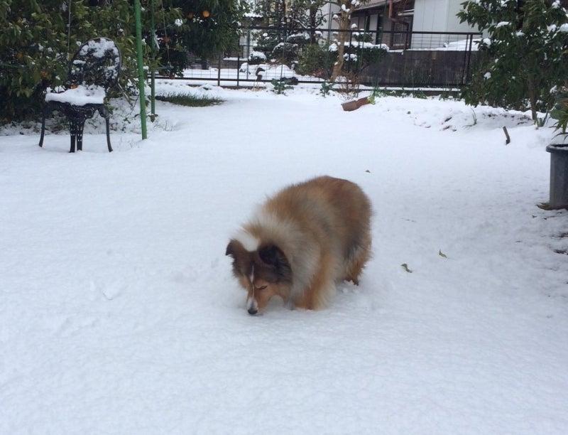 雪を食べる②