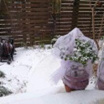 雪です…ね(笑)