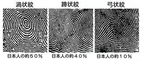解剖学のつまみ喰い『指紋の種類...