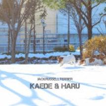 雪♪雪♪やっほほ〜い…
