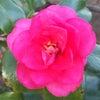 花あそび 0128の画像