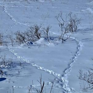 雪の信州の画像