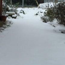 雪を見ないと寂しいが…