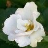 花あそび 0130の画像