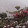 この冬、雪見た=ブロ…