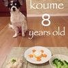 *Happy B-day to 小梅*8歳のお誕生日◡̈♥︎の画像