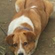 我が家の愛犬